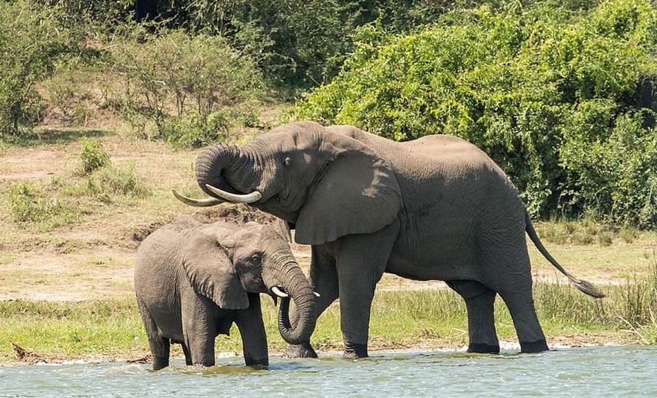 Mueren al menos 275 elefantes en Botswana por causas misteriosas